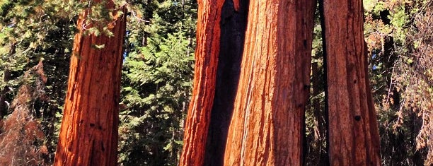 Sequoia National Forest is one of Sequoia National Park.