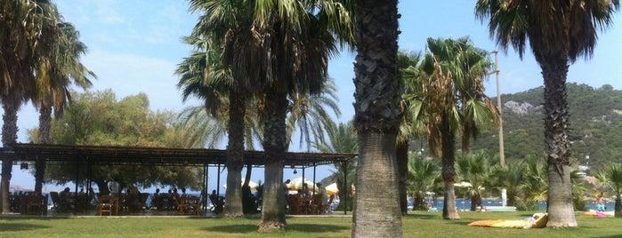 Selvi Beach Otel is one of Bodrum.