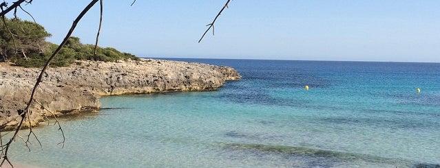 El Paladar, Jamoneria & Delicatessen is one of Menorca.