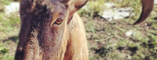 Fossil Rim Wildlife Center is one of Temple....