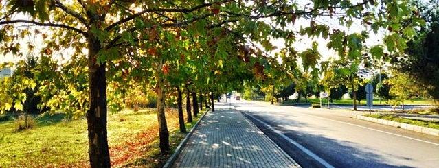 Uludağ Üniversitesi is one of Liste.