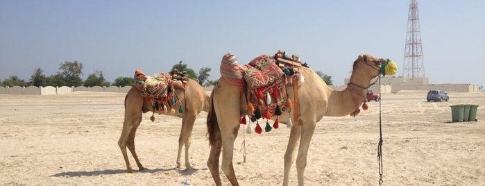 Sealine Desert is one of Volta ao Mundo oneworld: Doha.