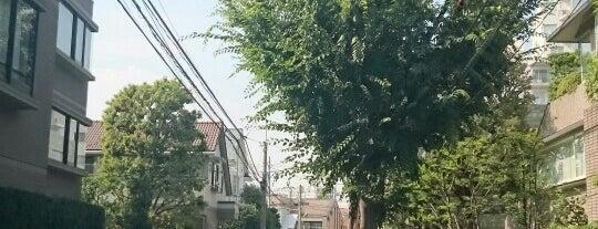 近衛の大榎 is one of ☆.