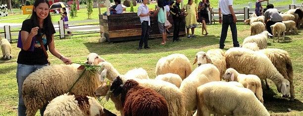 Pattaya Sheep Farm is one of Travel.