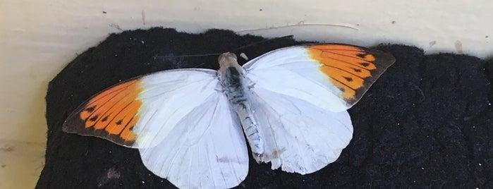 The Butterfly Farm is one of Aruba.