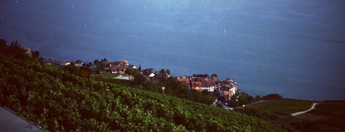 Le Baron Tavernier is one of Top Picks for Foodies in Vaud, Switzerland.