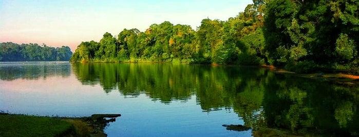 MacRitchie Reservoir is one of Sehenswertes.