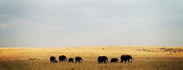 Masai Mara is one of Bucket List ☺.
