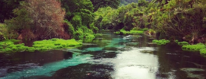 Hamurana Springs Reserve is one of New Zealand Highlights.