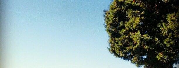 Willard Park is one of Guide to Berkeley's best spots.