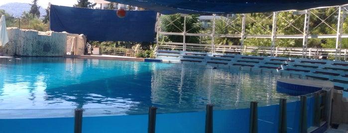 Dolphinarium is one of Antalya-Fethiye.