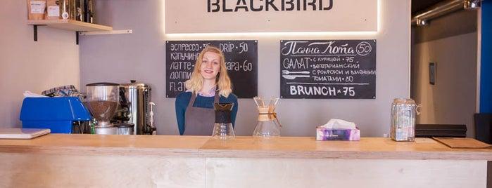 Whitebeard Blackbird is one of Kyiv, I'm back!.