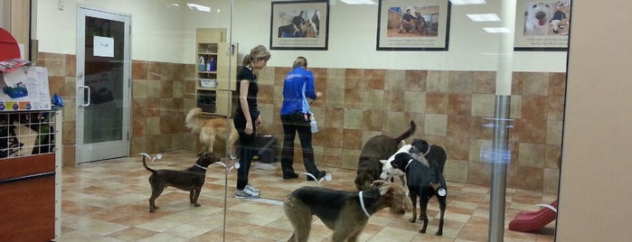PetSmart is one of The 15 Best Places for a Grooming in Los Angeles.