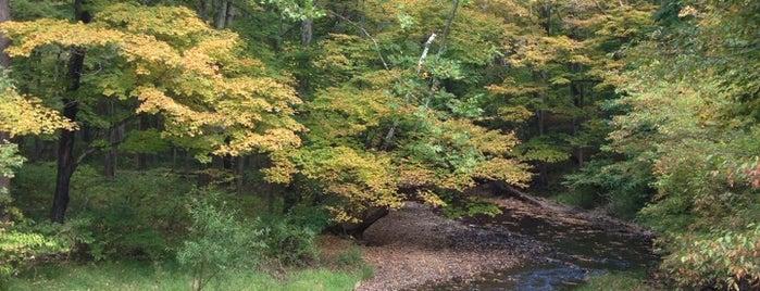 Bowman's Hill Wildflower Preserve is one of Romantic Philadelphia.