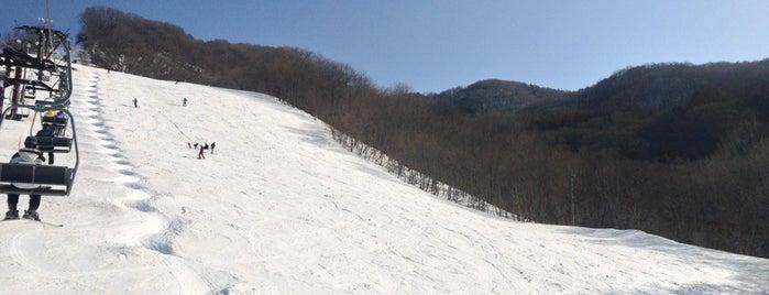 奥利根スノーパーク is one of スキー場.