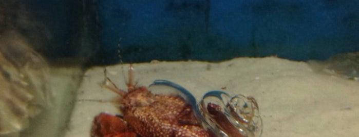 Gulf Specimen Aquarium is one of Sundays.
