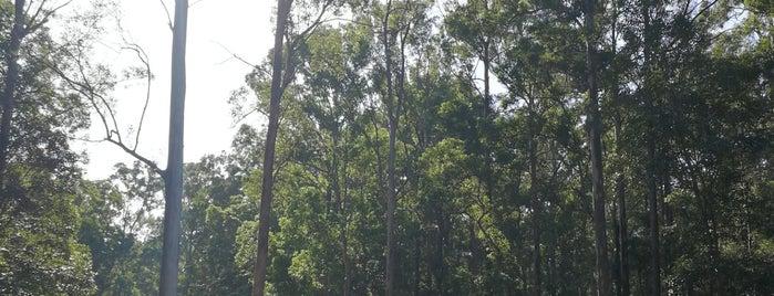 Daisy Hill Koala Centre is one of East Coast, Australia.