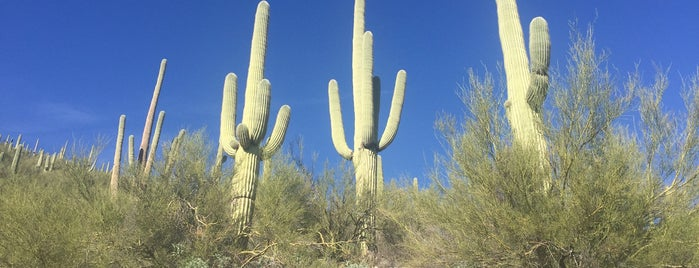 Mount Lemmon is one of TUC Latin Faves in The Old Pueblo.