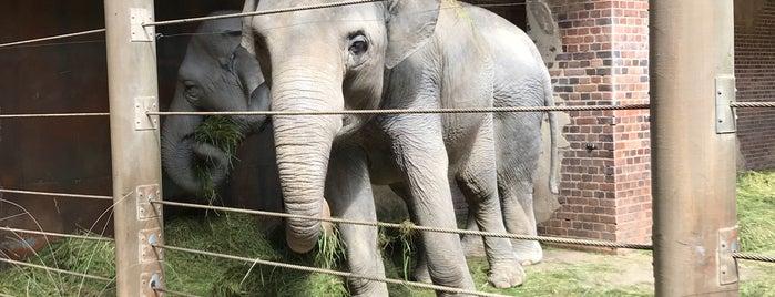 Elefantentempel is one of Leipzig.