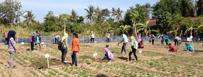Kebun Percobaan Fakultas Pertanian UGM is one of Fakultas Pertanian UGM.