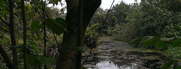 Sungei Buloh Wetland Reserve is one of All-time favorites in Singapore.