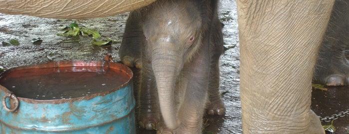 Pinnawala Elephant Orphanage is one of Trips / Sri Lanka.