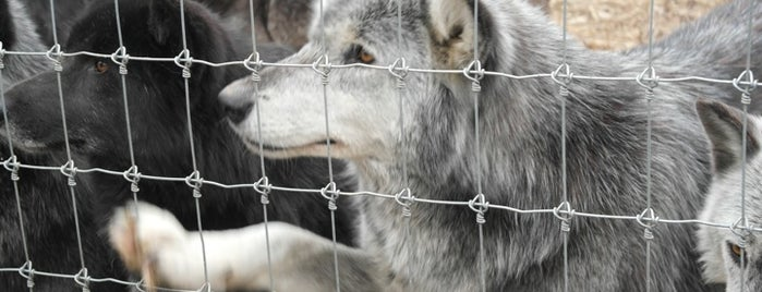 Speedwell Wolf Sanctuary is one of Wishlist.