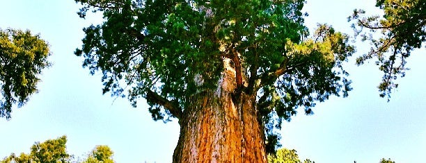 General Sherman Tree is one of Sequoia National Park.
