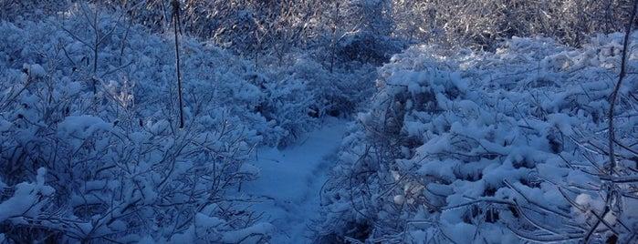 Glen Ferguson Side Trail is one of Outdoors.