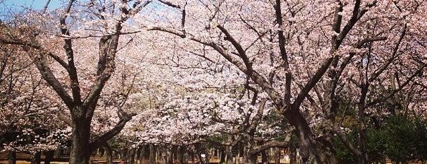 Yoyogi Park is one of Tokyo! (^_^)v.