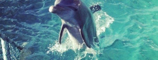 Dolphin Discovery is one of Mexico // Cancun.