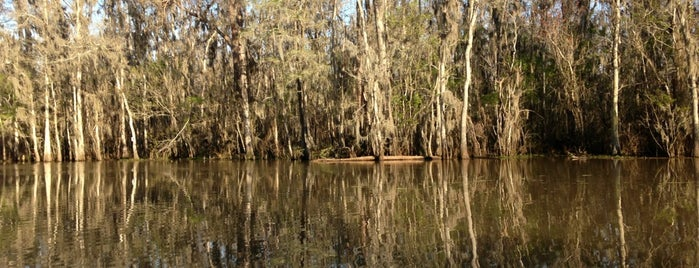 Dr. Wagner's Honey Island Swamp Tour is one of New Orleans.