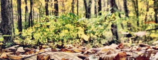 Mass Audubon Broad Meadow Brook is one of Hiking Trails - MA.