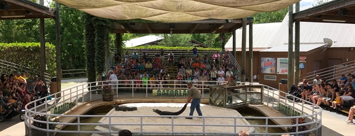 Gator Wrestlin' is one of Florida!.