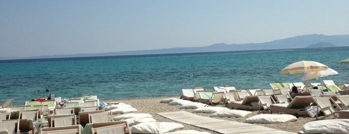 Μόλος on the Beach is one of 🌞🌊Chalkidiki-->to The Beach 🐋🐬🐟🐠🐡🦀.