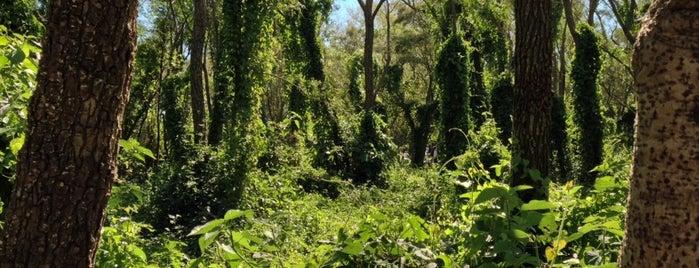 Parque Nacional Pre Delta is one of To edit.