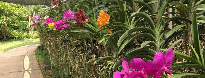 Bai Orchid & Butterfly is one of Thailand.