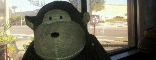Drunken Monkey Coffee Bar is one of Florida trip 2013.