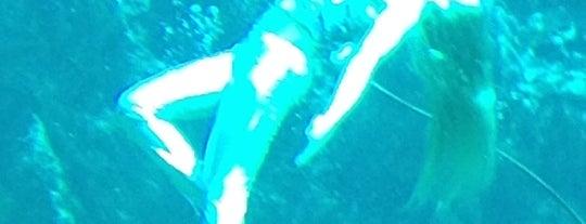 Weeki Wachee Springs is one of Spring Break 2012.