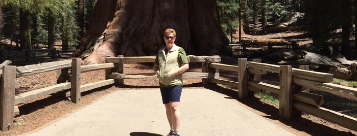 Congress Trail is one of Sequoia National Park.