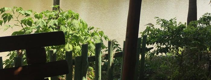 สวนอาหารวังปลาหน้าเขื่อน is one of ลำพูน, ลำปาง, แพร่, น่าน, อุตรดิตถ์.