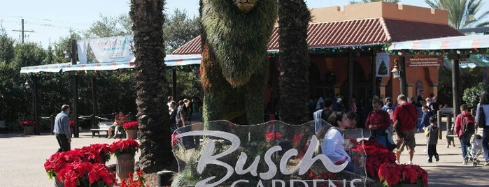 Busch Gardens Tampa Bay is one of Florida.