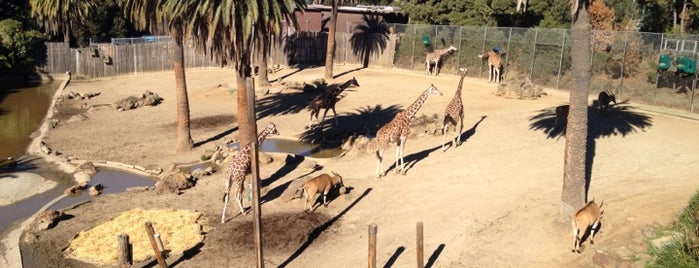 Giraffe Exhibit is one of The 15 Best Fun Activities in Oakland.