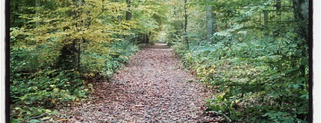 """Dering Wood is one of Wood""""Forest""""meditazione_ Kent/East SusseX."""