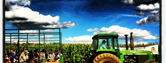 Stony Hill Farm Corn Maze is one of Favorite places.