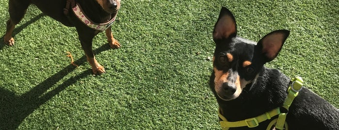 Skinner Dog Park is one of The 15 Best Dog Runs in Chicago.