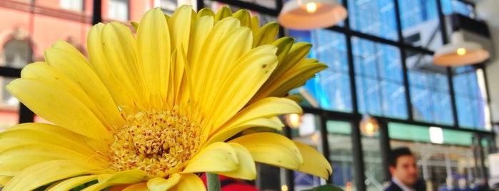 Sun In Bloom is one of healthy eats.