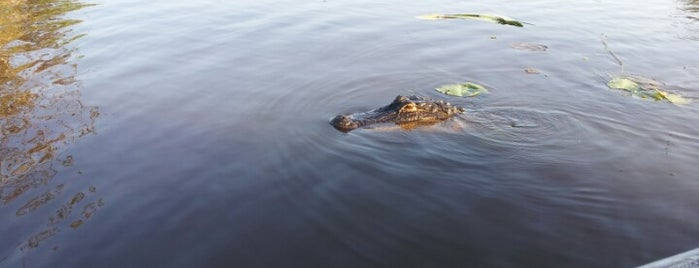 Cajun Encounters Honey Island Swamp Tour is one of New Orleans.
