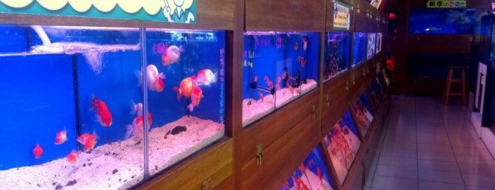 魚中魚貓狗水族大賣場 is one of 住新店 Xindian Living.