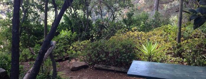 Amiru0027s Garden Is One Of The 13 Best Gardens In Los Angeles.